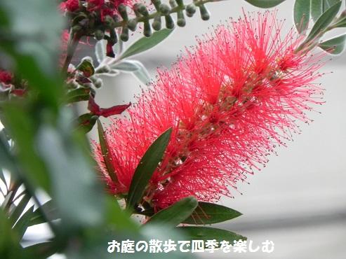 kinpoujyu14_201605160847280b2.jpg