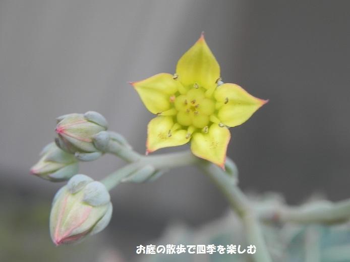 taniku140_201610051237125e1.jpg