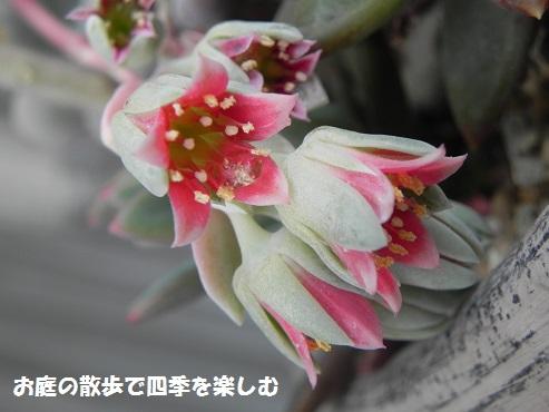 taniku144_20160523172936c49.jpg
