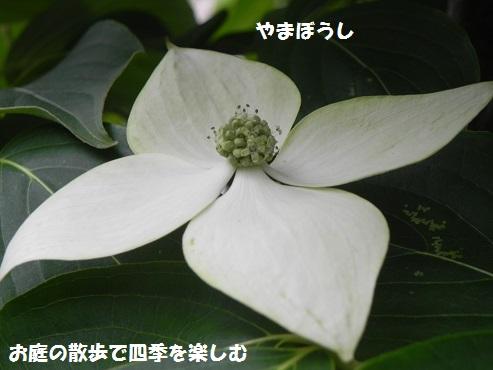 yamabousi14_201605220900365d1.jpg