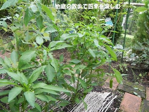yasai3_20160727184154139.jpg