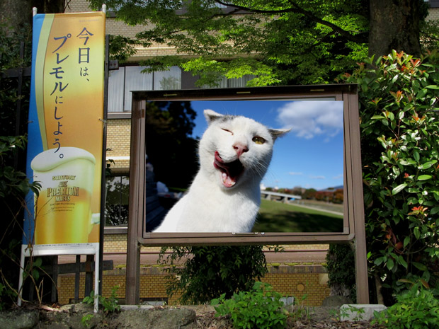 2016-0730-1590-shiro.jpg