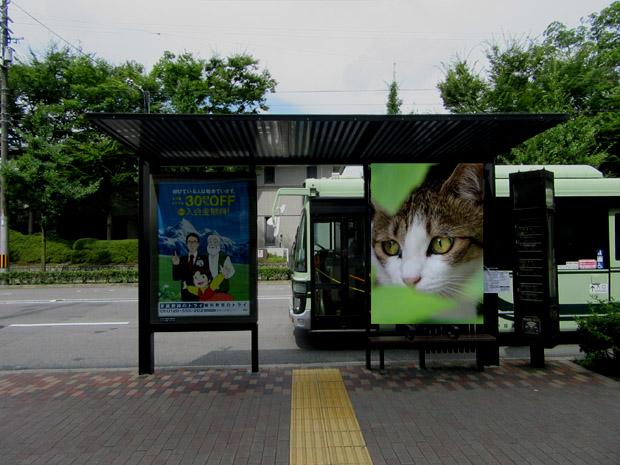 bus-stop-sakura-2-620.jpg