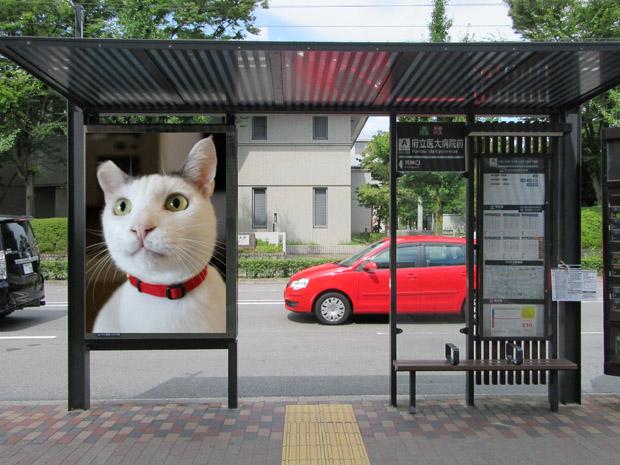 bus-stop-shiro-x-620.jpg