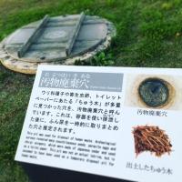 20161023hiraizumi_33.jpg
