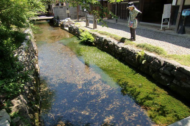 地蔵川の藻2