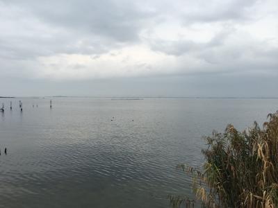 雨の琵琶湖南湖マクドナルド阪本店裏 弱い雨が降り続いてます(11月8日14時30分頃)