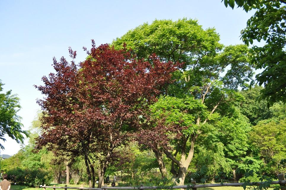 京成バラ園3