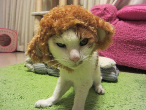 猫猿ちょん