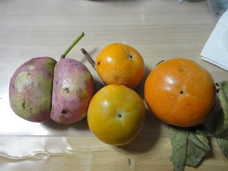 ムベと富有柿