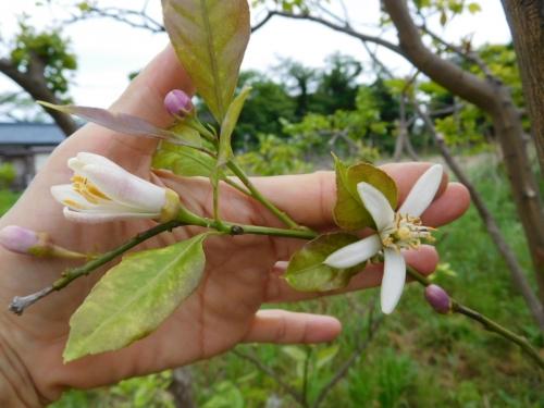 DSCN2184謎の花