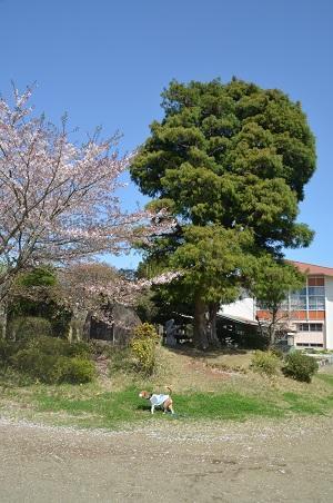 20160415宍倉小学校22