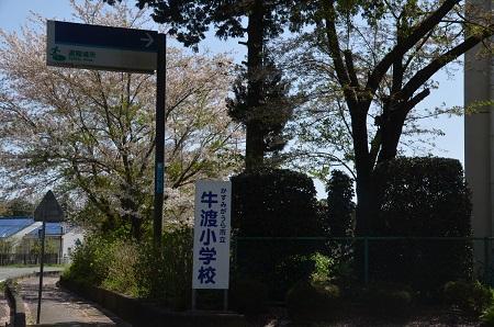 20160415牛渡小学校01