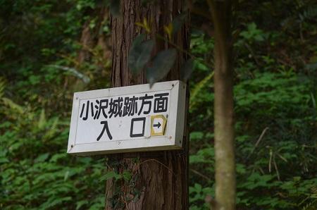 20160423小沢城址11
