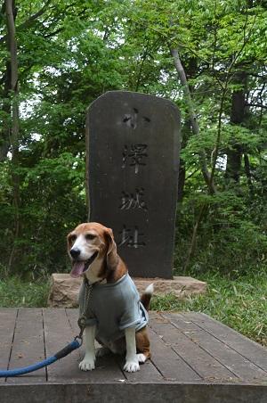 20160423小沢城址17