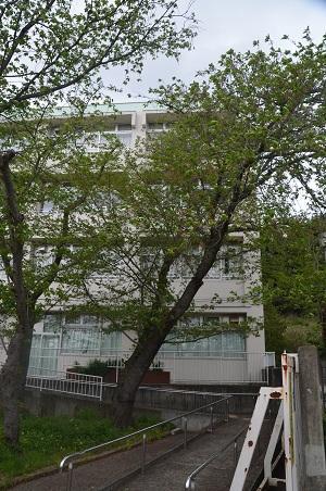 20160423稲城第八小学校12