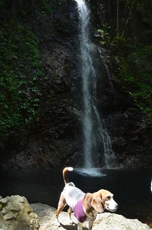 20160430払沢の滝14