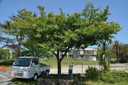20160518保田中学校09