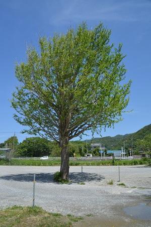 20160518保田中学校19