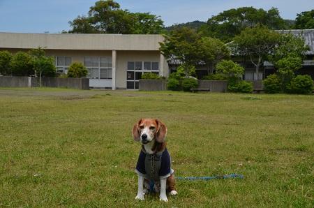 20160518滝田小学校07