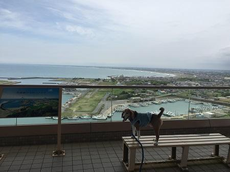 20160531関東の富士見百景04