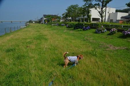 20160701水郷北斎公園08