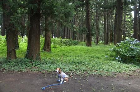20160701稲荷山公園15