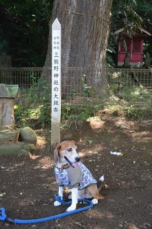 20160701権現山公園06