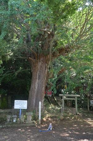20160701権現山公園07
