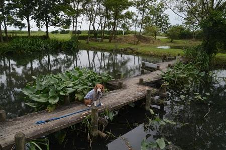 20160701水郷トンボ公園06