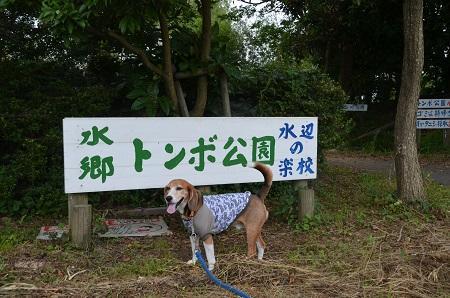 20160701水郷トンボ公園01