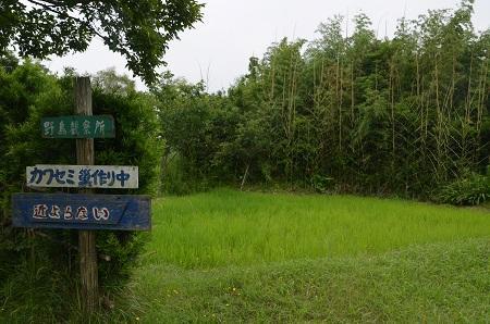 20160701水郷トンボ公園10