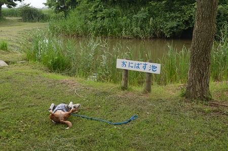 20160701水郷トンボ公園08