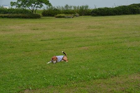 20160701水郷トンボ公園21