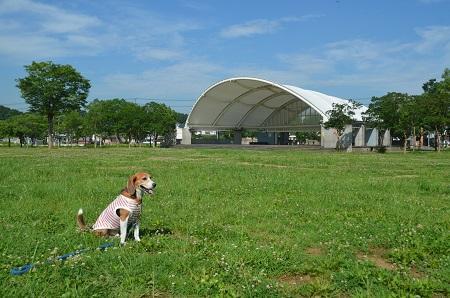 20160707竜ヶ丘公園05