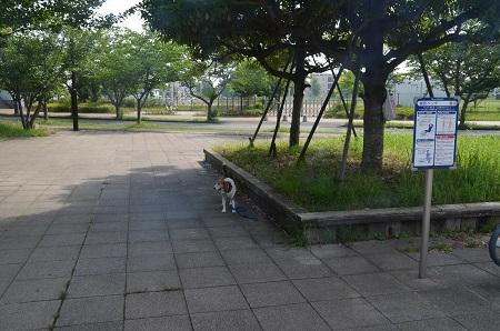 20160707竜ヶ丘公園21