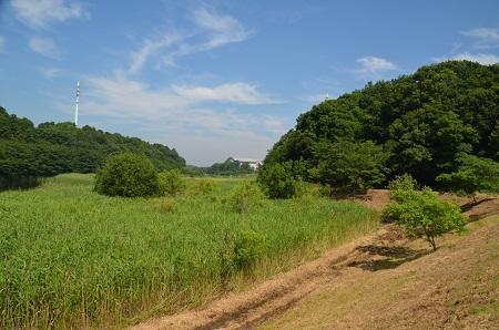 20160707竜ヶ丘公園32