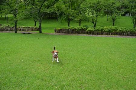 20160715ダム広場公園17