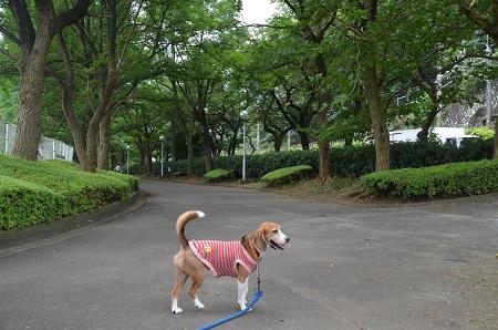 20160715小山臨海公園03