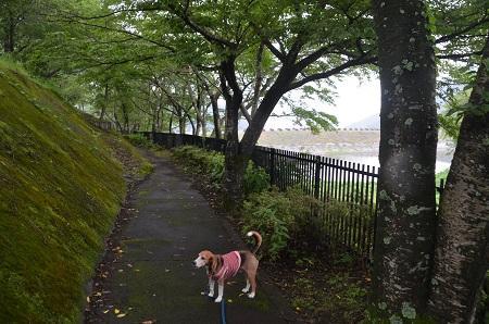 20160715丹沢湖16