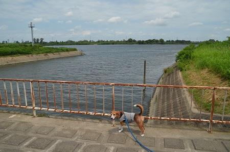 20160720長門川公園24