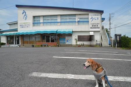 20160720北印旛沼01