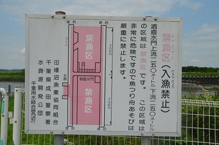 20160720北印旛沼15