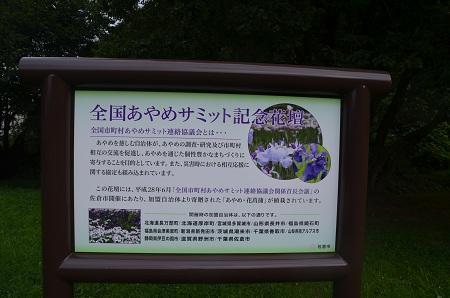 20160811佐倉城址公園05