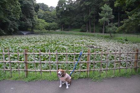 20160811佐倉城址公園17
