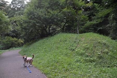 20160811佐倉城址公園21