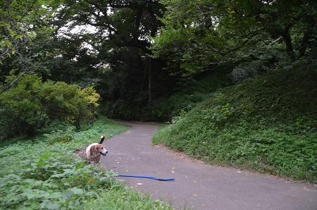 20160811佐倉城址公園22