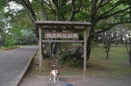20160811佐倉城址公園32
