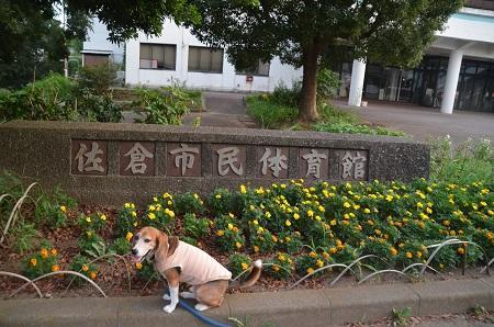 20160811佐倉藩校跡10