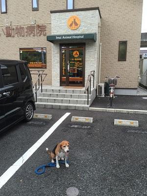 20160812今井動物病院03